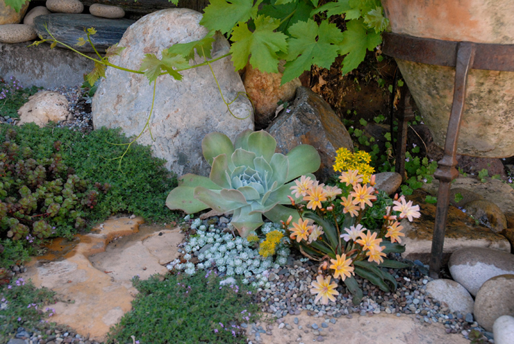 Rock Garden Liz Simpson Garden Design Enchanting Alpine Garden Design
