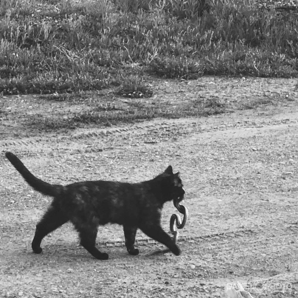 daniel-hedrick-cat-snake-2160.jpg