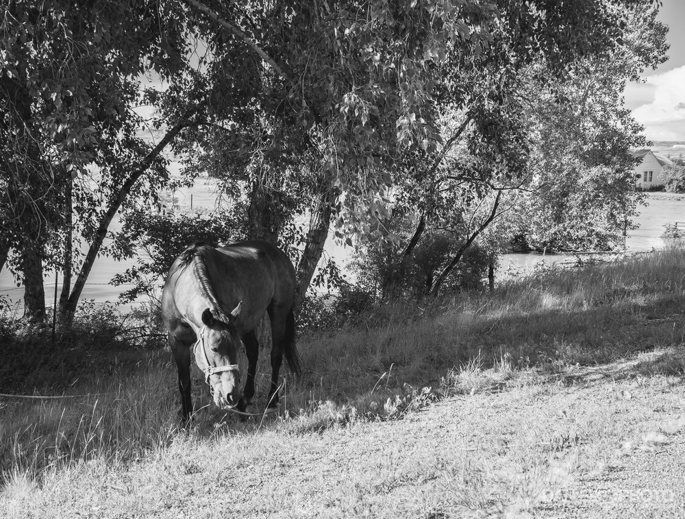 Horse grazing next to flood waters