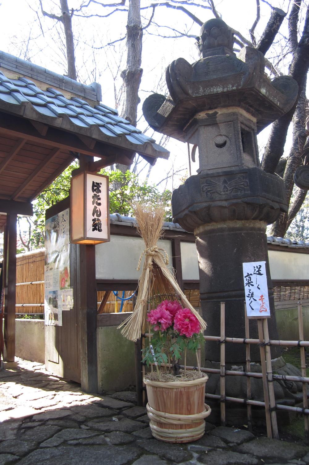 Tokyo, Day 1: Ueno, Peonies & Wishes