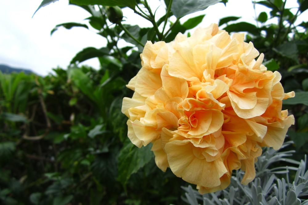 Hualien (花蓮)