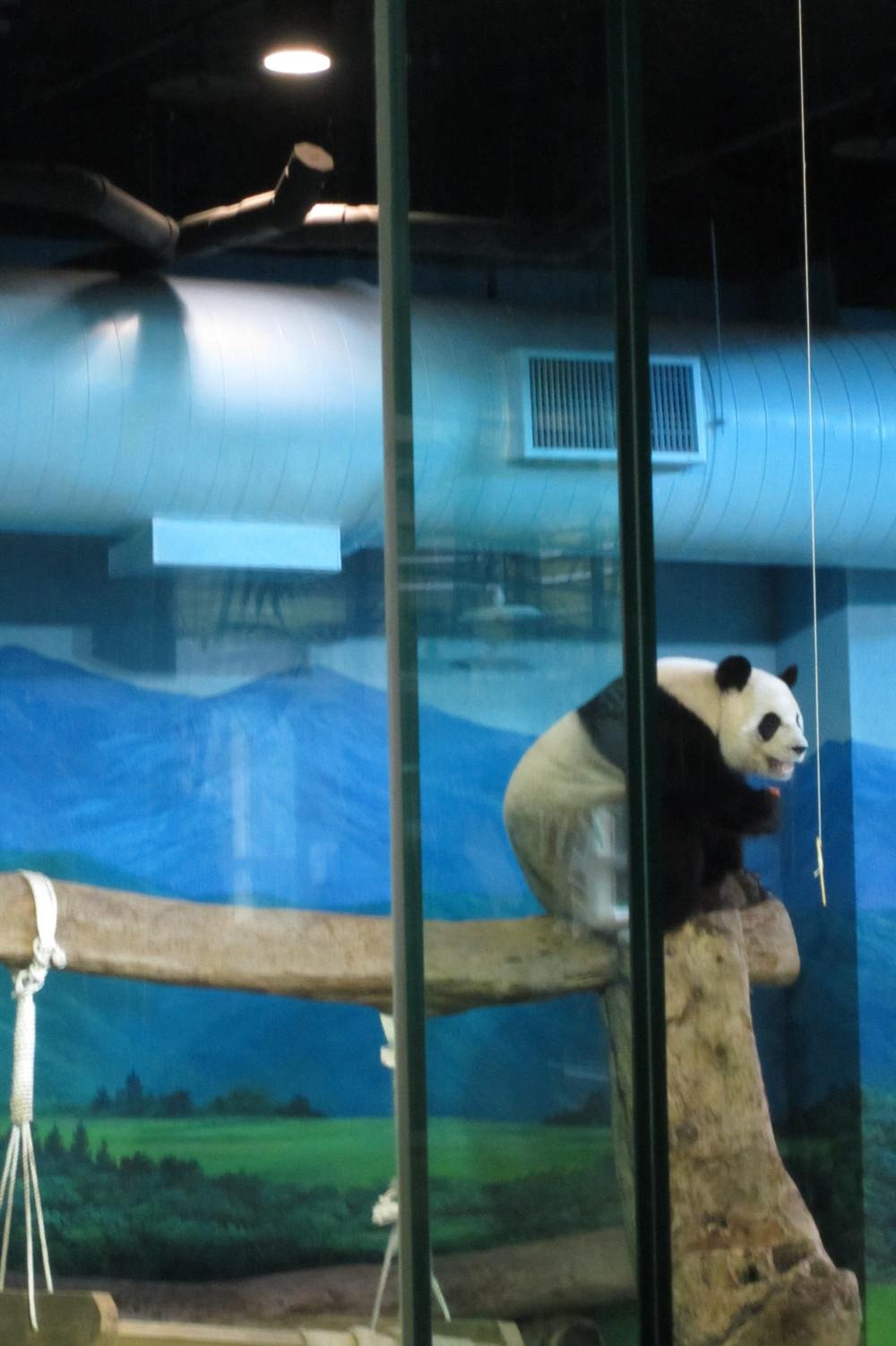 PANDAS! 3 PM!