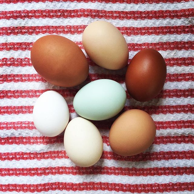 "We are each so very different. . I caught myself looking at these eggs – (one of the many fine donations I get for teaching a community yoga class at the YogaFarm). . I can't help but think why we can honor and have such reverence and joy in celebrating difference when we look at these pretty little eggs – but when we look at the way each individual assimilates information,  shows up in the world, expresses love and emotes..... all of a sudden, there's a whole lotta right and wrong… Too much and not enough… Acceptable and unacceptable… and the ""just right""'point is not static -- it's like water..... moving, shifting and changing -- always. . You can be beautiful – but don't attract too much attention. . You can dress gorgeously – but there's a fine line between gorgeous and ""you know what"". . You can be smart – but not so smart that I lose influence. . I am doing some deep study lately --- and I'm holding sacred vigil for the good the bad and the ugly -- and I'm reaching in and reaching out (to you) and inviting you to look within and see where your own edges are..... and sense what it might be like -- the next time you felt like you were ""too much"" or ""not enough"" if someone expanded the boundaries of acceptability and invited in your ""everything"".... ??? How would that be? And how might you do that for someone else. 🙏🏻❤ Happy Friday, dear ones. ... #liveyouryoga #om #yogalookslikethis #sankalpa  #livewithintention #divineyourlife #spirituality #onewithall #manifest #supersoulsunday #mindful #liveinthelight #getoffyourasana #thisisyogatoo #practiceyogaeveryday #mondaymorninginspiration #mindfulness #doitdifferently #consciousliving #godeepandgoOM #divineyourlife #walkwithme #pilgrimoflight #108dayyogi #108daypilgrim"