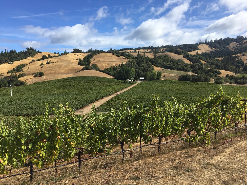Anderson Valley is known for its Pinot Noir and Alsatian grape varieties