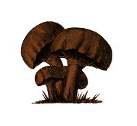 colour mushroom 72dpi.jpg