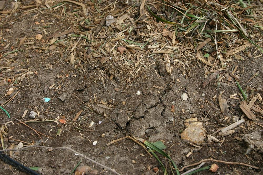 spring moles (2).JPG