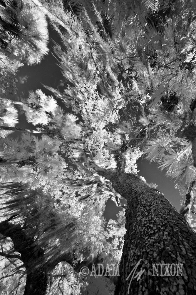 Erna Nixon Park Hanging Moss