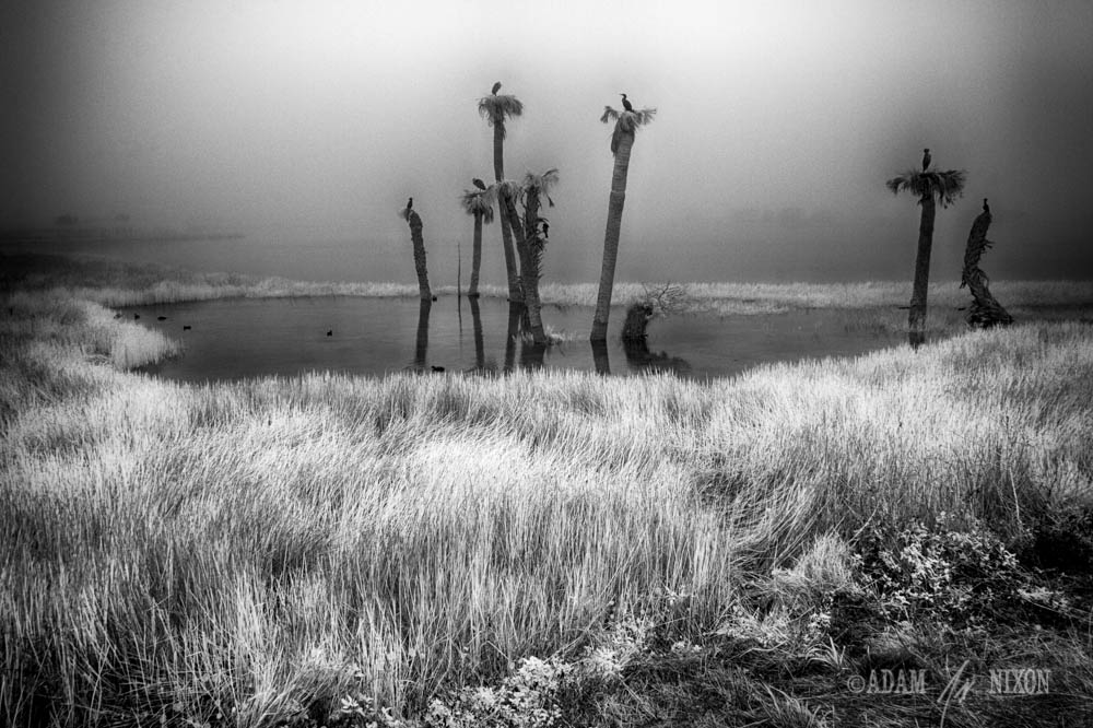 Foggy Viera Wetlands