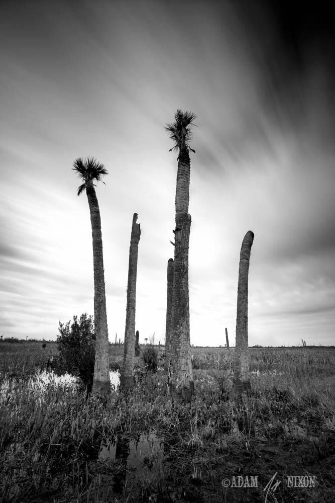 Viera Wetlands #2