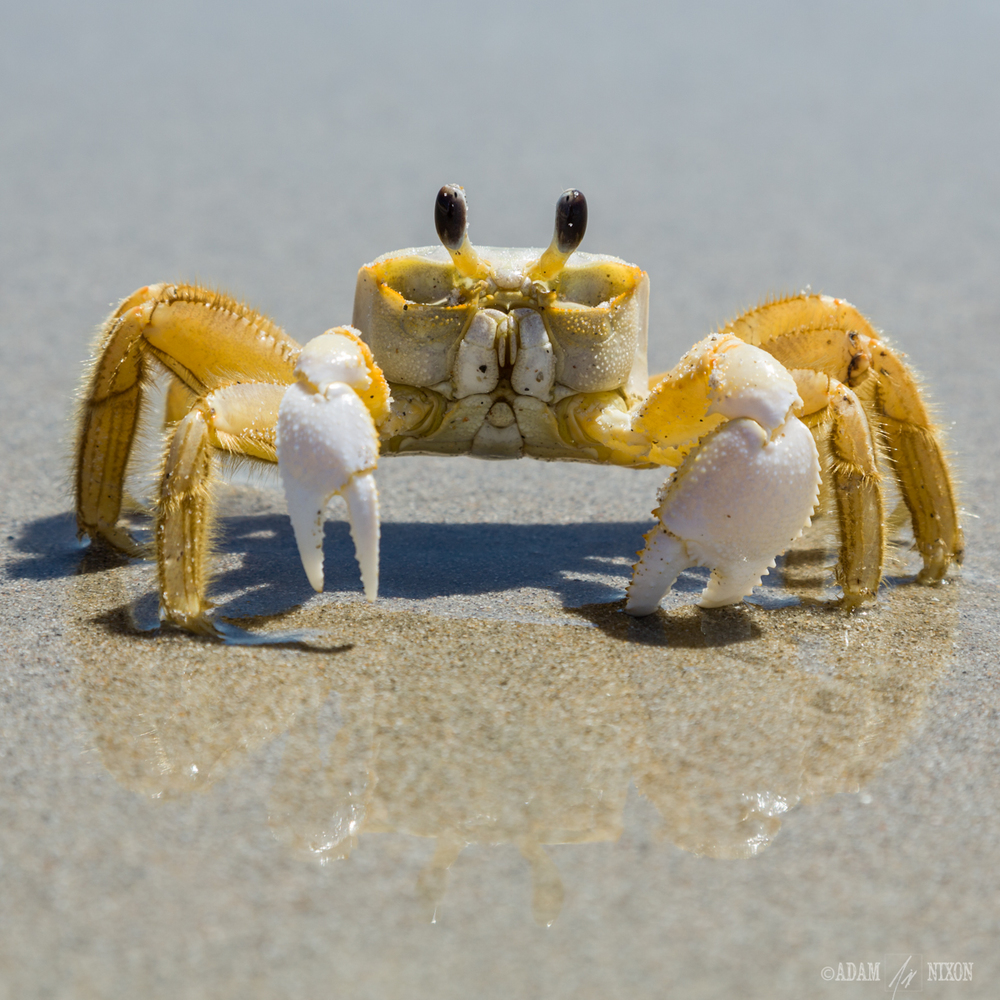 Crab on Beach.jpg