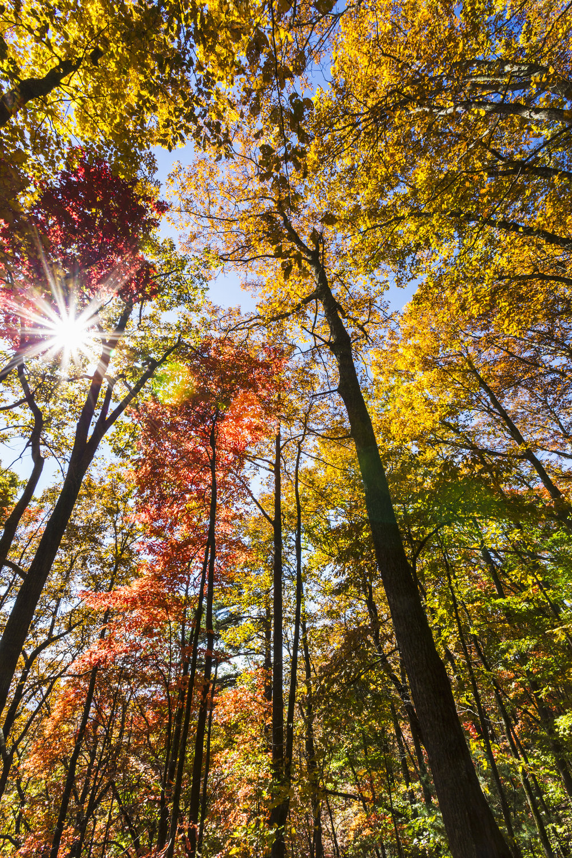 Sun shining through the colorful fall trees