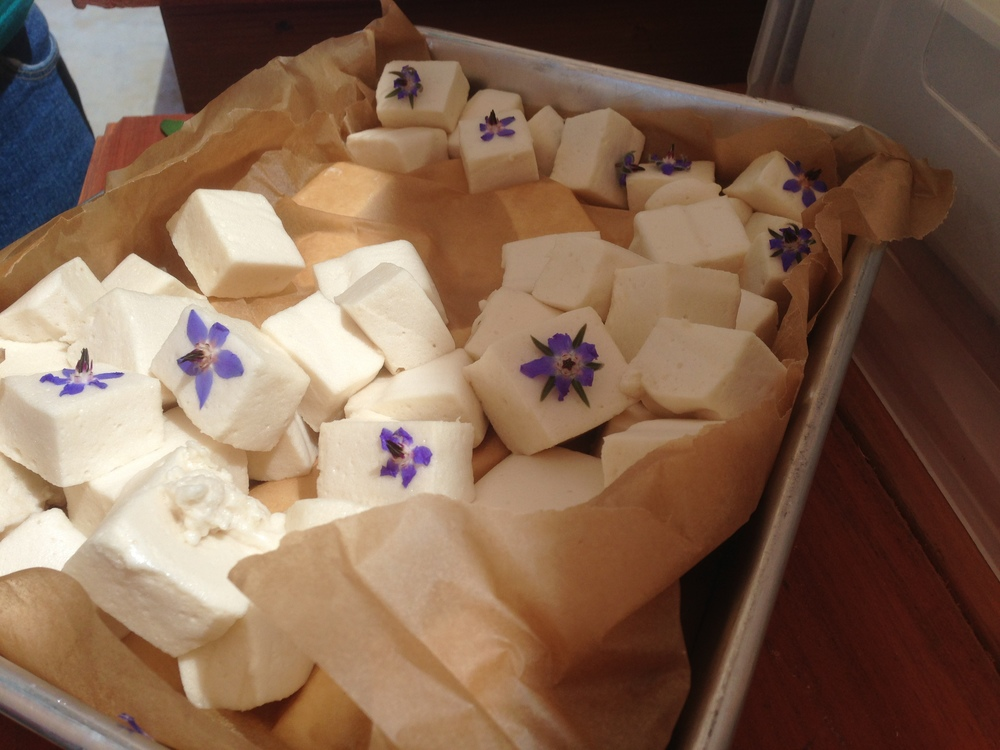homemade marshmallows accented with edible borage flowers
