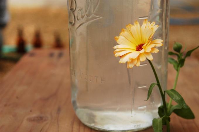 calendula hydrosol.jpg