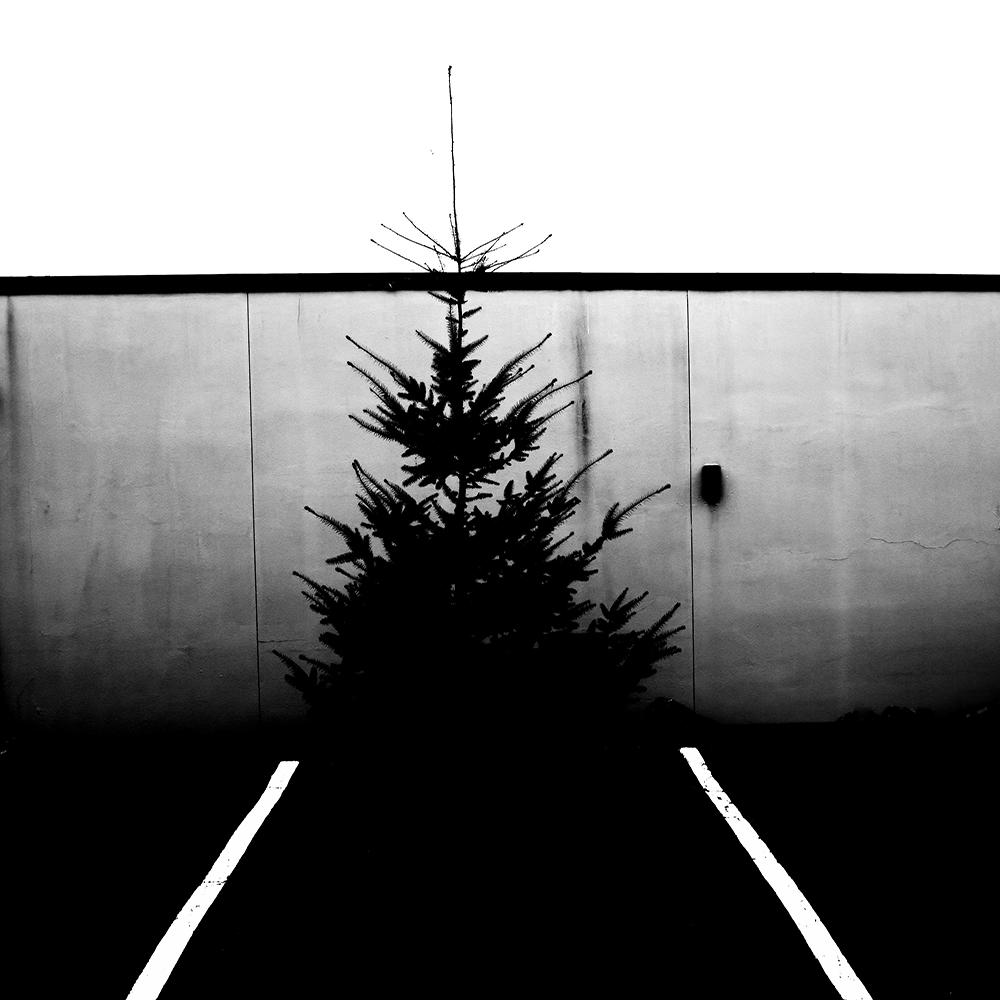 mono_tree.jpg
