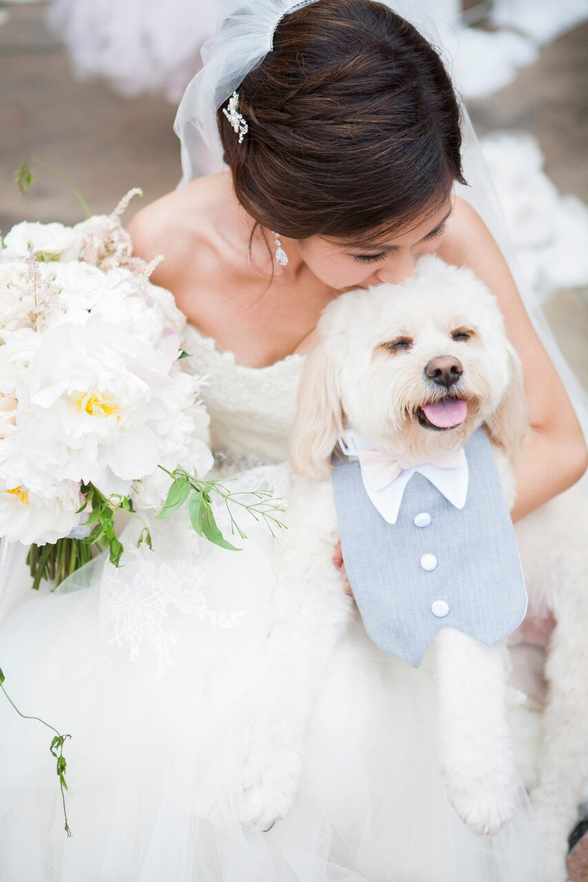 dog in wedding.jpg