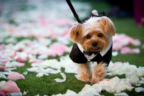 dogs in wedding blog 11.jpg