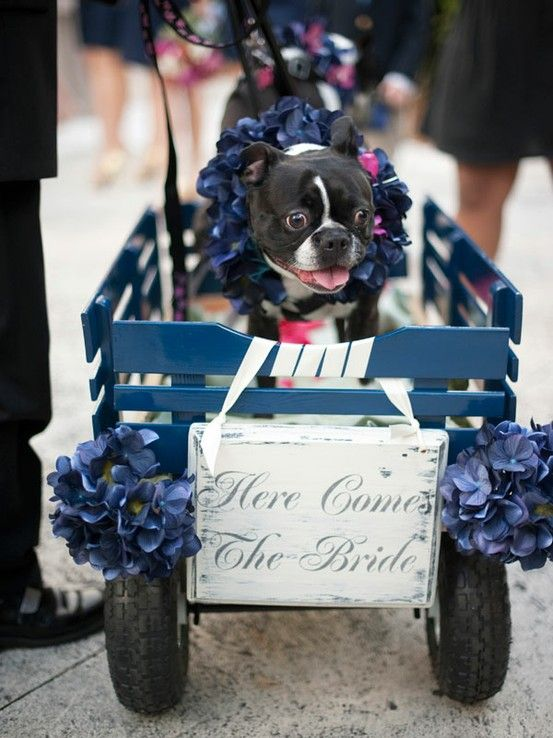 Dogs in wedding blog 4.jpg