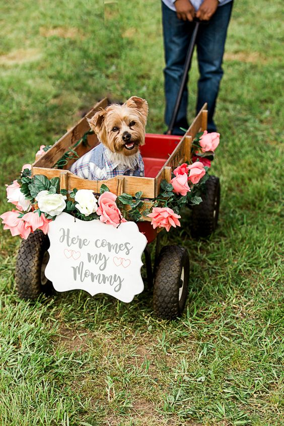 dogs in wedding blog 16.jpg