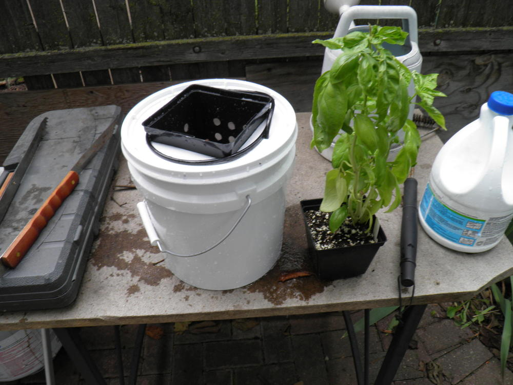 Sanitized Water Reservoir with Basil Plant
