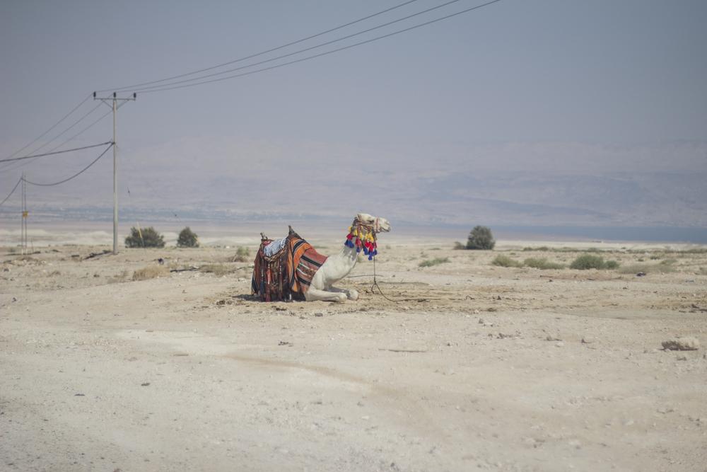 Foto: Maria Torres-Solanot ©   Carretera de Jerusalén a Jericó. Los camellos de los beduinos dejan marcadas sus huellas en el desierto que la rodea. Son señales en el árido paisaje arenoso que marcan los itinerarios del páramo que contornea el mar Muerto. El calor aumenta y el aire se hace pesado al descender el nivel del mar.   READ MORE AT: La historia continúa en el diario  NEUPIC