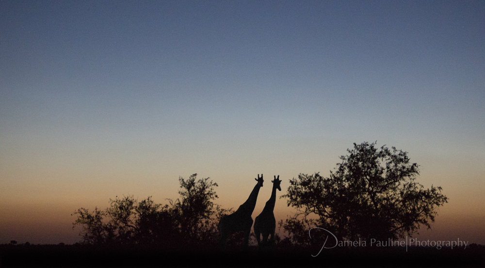 Sundown in Botswana