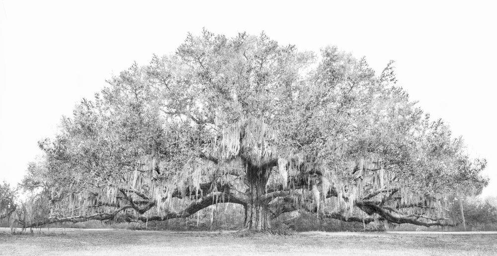 1 - Avery Tree 2