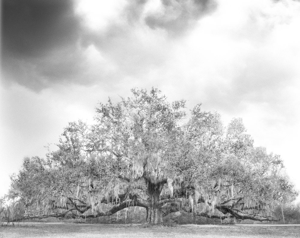 5 - Avery Tree 2b