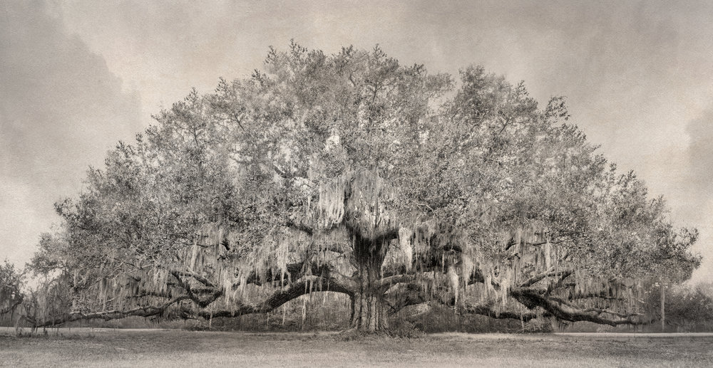 3 - Avery Tree Sepia