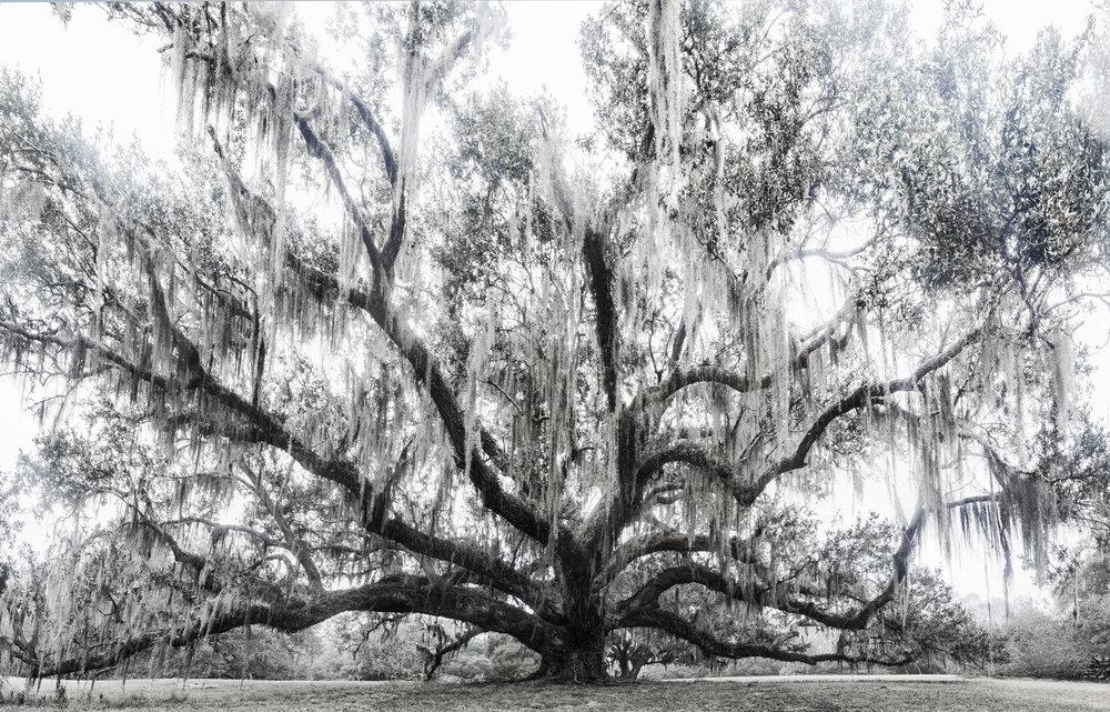 11 - Oak Approach