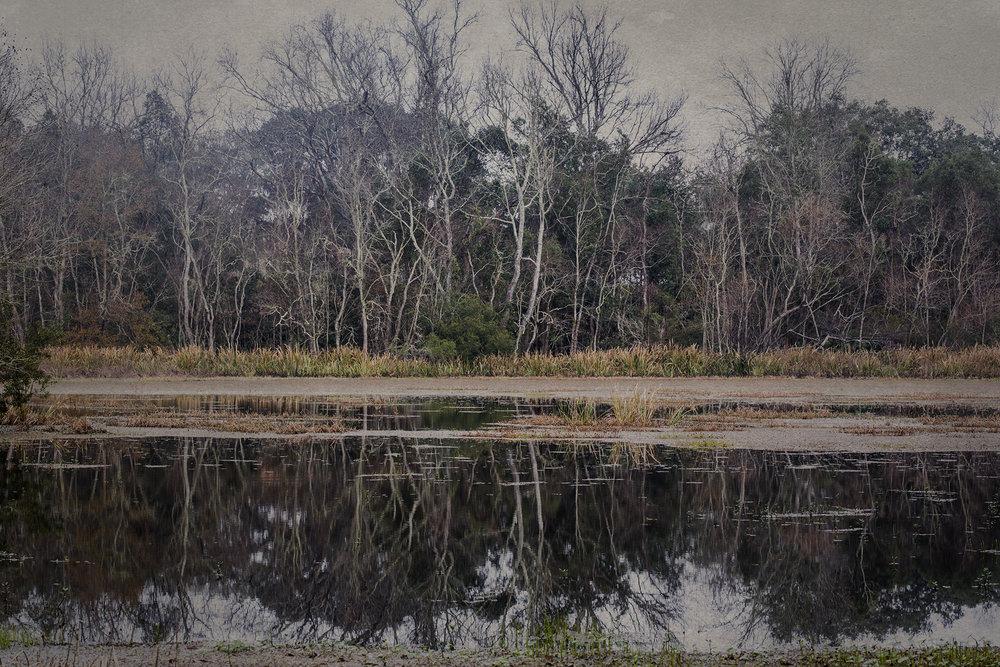 New 11 - Swamp 2