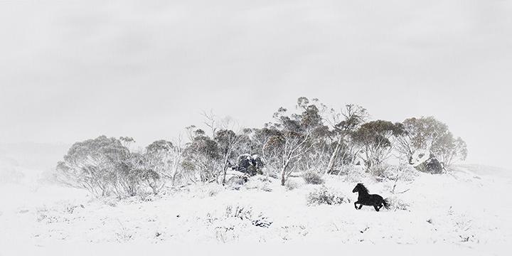 NSW2017_PaulineP_1web.jpg