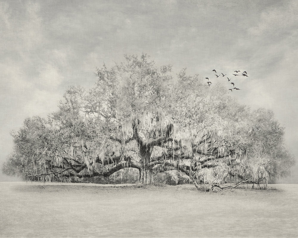 Lonelytreebirds60x48