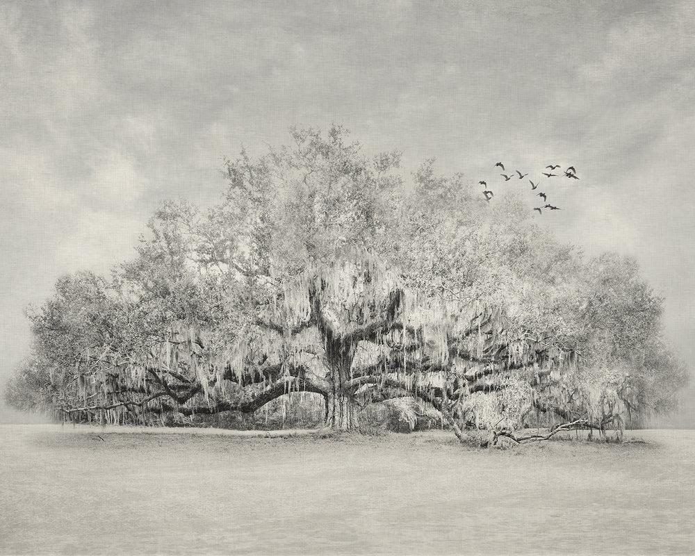 Lonelytreebirds60x48