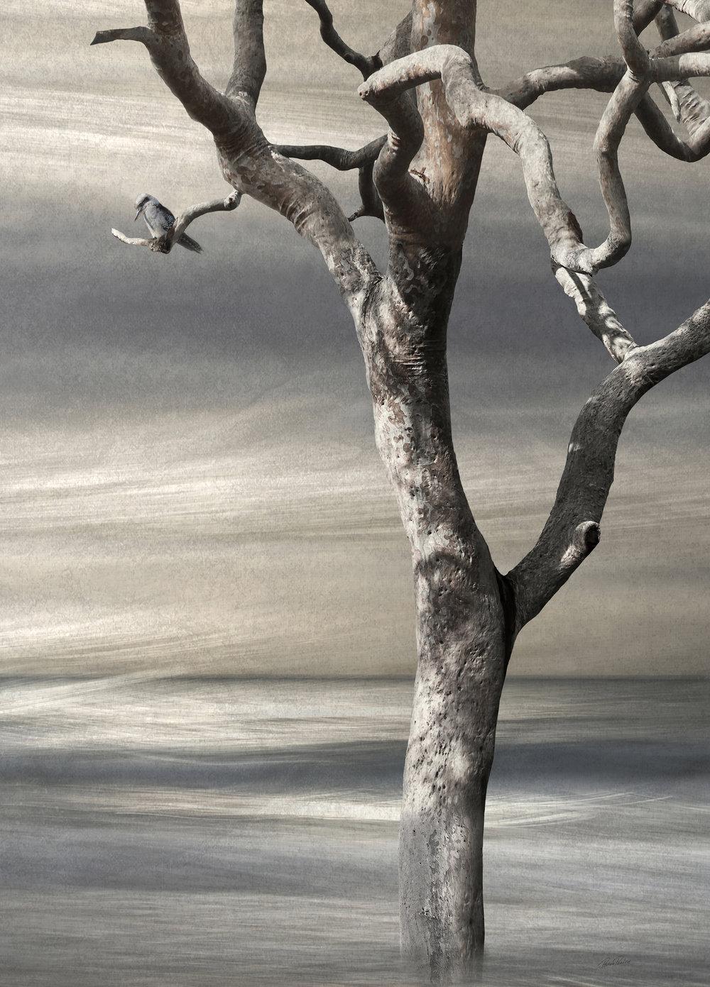 kookaburralaughsweb.jpg