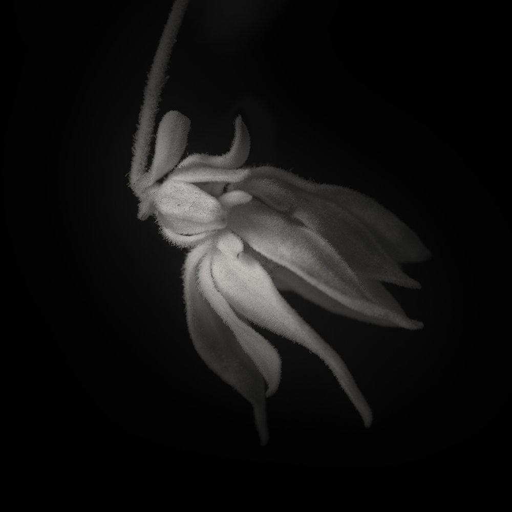 Fairy Flower