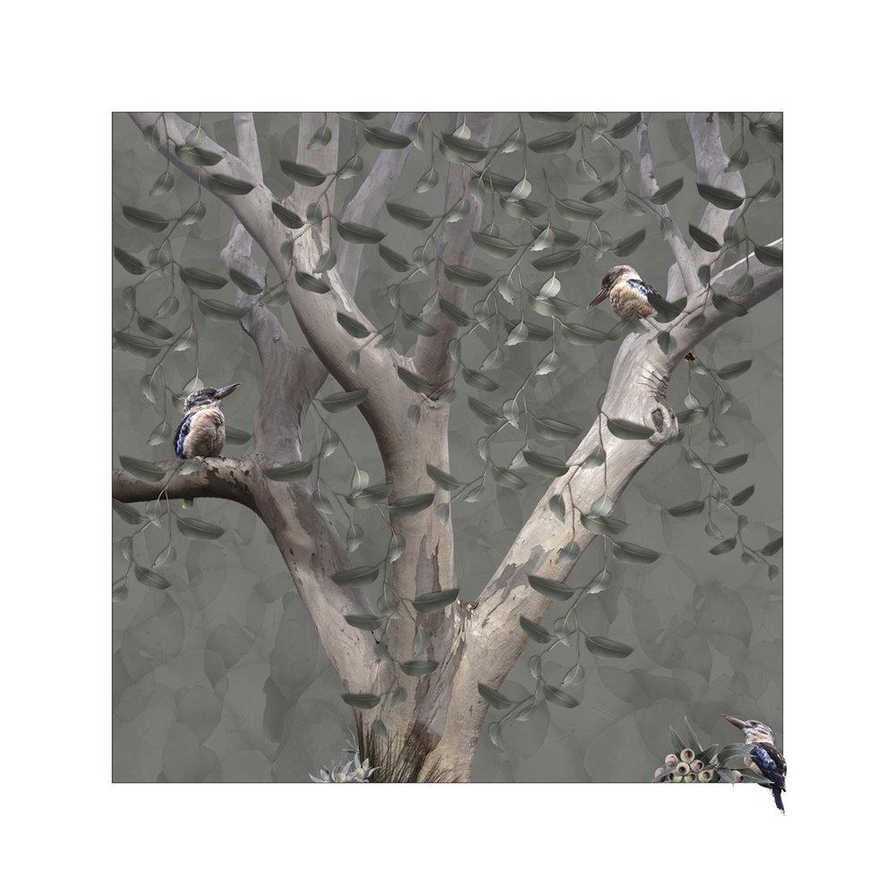 Kookaburra Tree in Sage