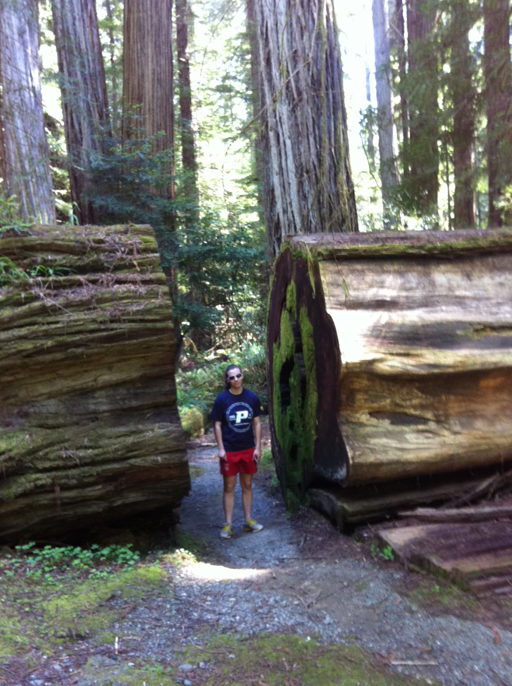 "Trail builders needed a ""breakthrough"" to get past this huge log in Humboldt Redwoods State Park, CA."