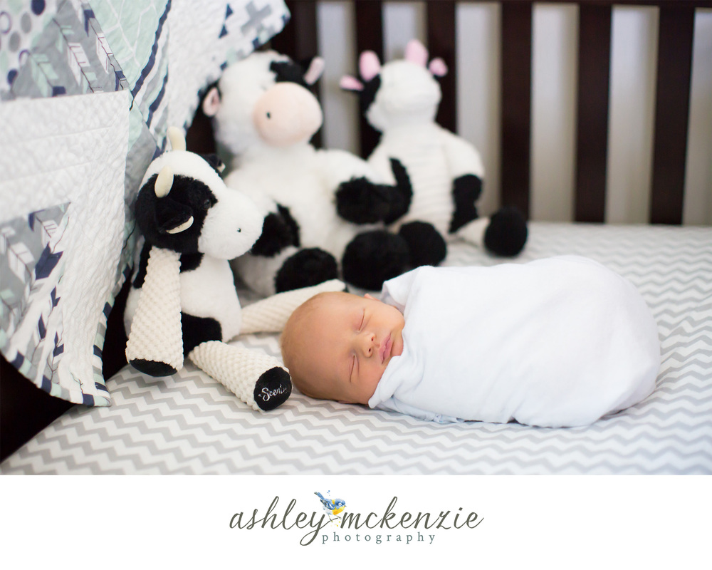 greeley newborn photographer