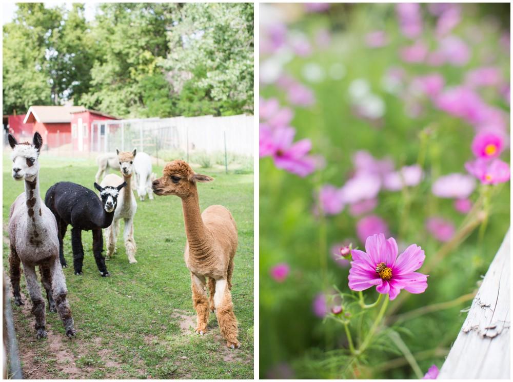 Lyons_Farmette_Alpacas_Flowers.JPG