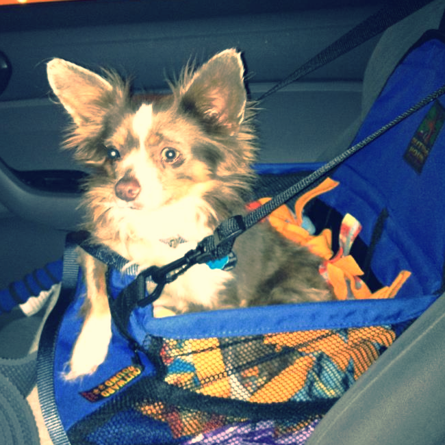 Otis sitting nicely in his carseat.