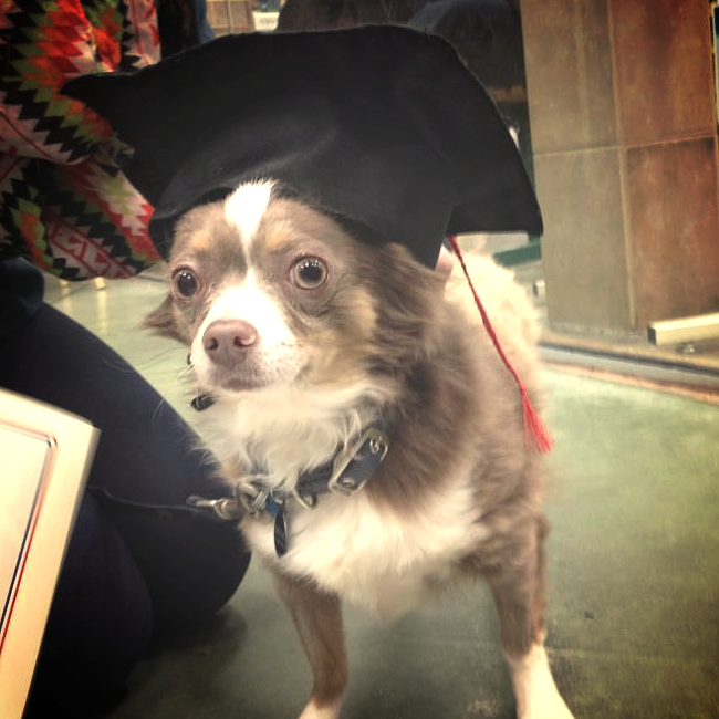 Otis graduating from obedience class.
