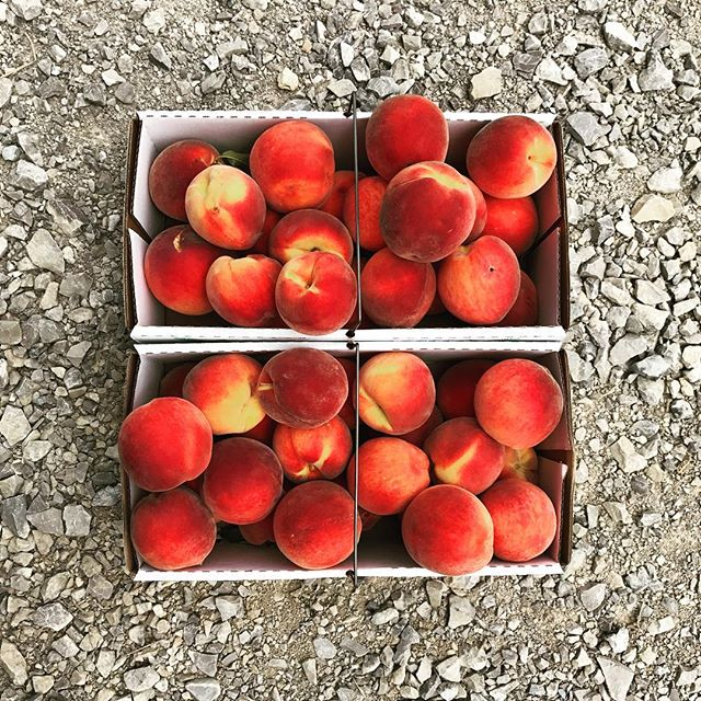 Peaches 4 days. #knowlanfamilyfarm