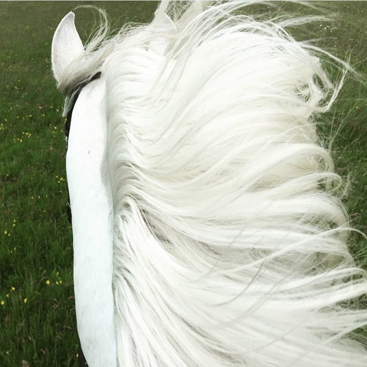 Just add knight.   Thanks to @maryamccartney, yes Paul's daughter, for this impossibly white mane and ears.   http://marymccartney.com/