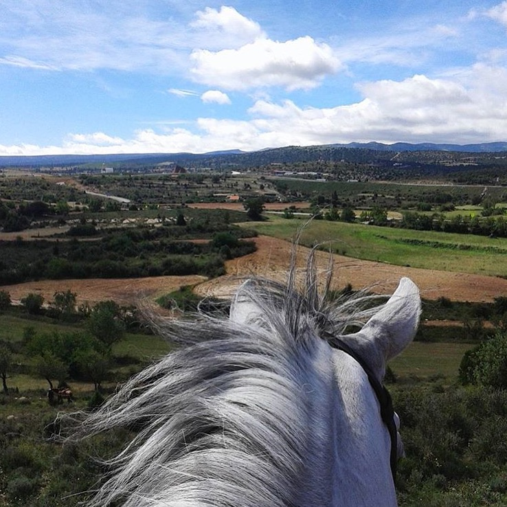 Thank you  @zeta3r  for this view near Spain's port city of Valencia, where the Turia River meets the Mediterranean Sea. And where there are lots of beautiful, white Baroque horses. And thank you @equi_geo for pointing me to this photo; I slways appreciate a good lead.  ......... Tag your photo #lifebetweentheears for a chance to be featured. Ride On! ^^ ........ #betweentheears #equestriantravel #caballo #baroque #valencia #spain #thankyou #zaira