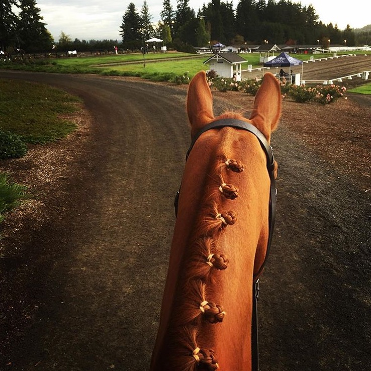 Great field trip to Devonwood this weekend for USDF Region 6 Championships where LBTE was a sponsor and I finally got to meet the fabulous 🔷 @chalice_farms 🔷/ Lea Wilson who killed it in the musical freestyle today. Thanks for this view between Sam's ears, Lea!  ......... Tag your photo #lifebetweentheears for a chance to be featured. Ride On! ^^ .......... #betweentheears #devonwood #usdf #region6 #sherwood #oregon #thankyou #leawilson #chalicefarms