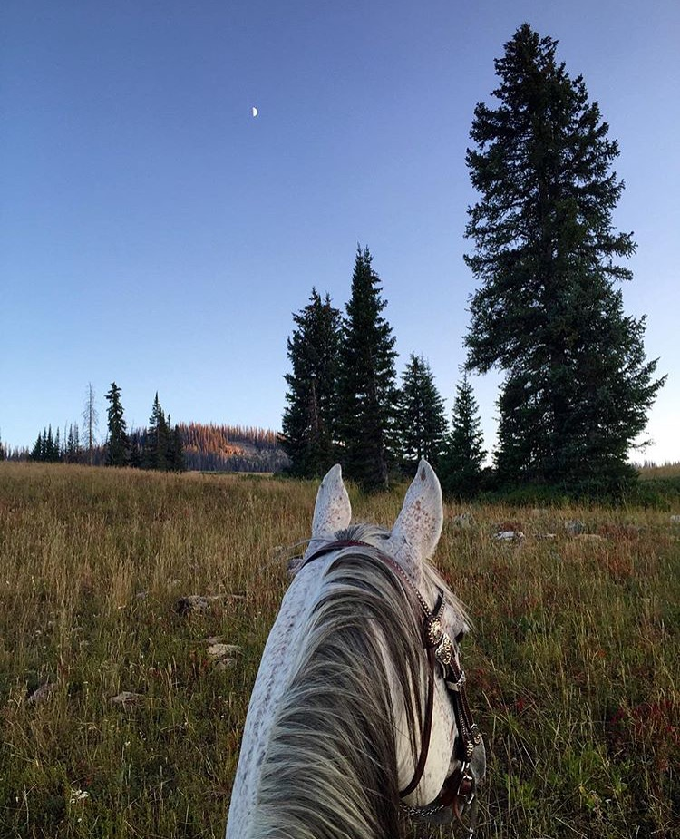 In Silence there is eloquence. Stop weaving and see how the pattern improves. - Rumi  Thanks to 🔷 @camillenicole13 🔷 for this gorgeous moment in the Unita mountains in NE Utah. ...... Tag your photo #lifebeetwentheears for a chance to be featured. Ride On! ^^ ...... #betweentheears #equestriantravel #equestrianphotography #unitamountains #utah #backcountry #thankyou #camilledean