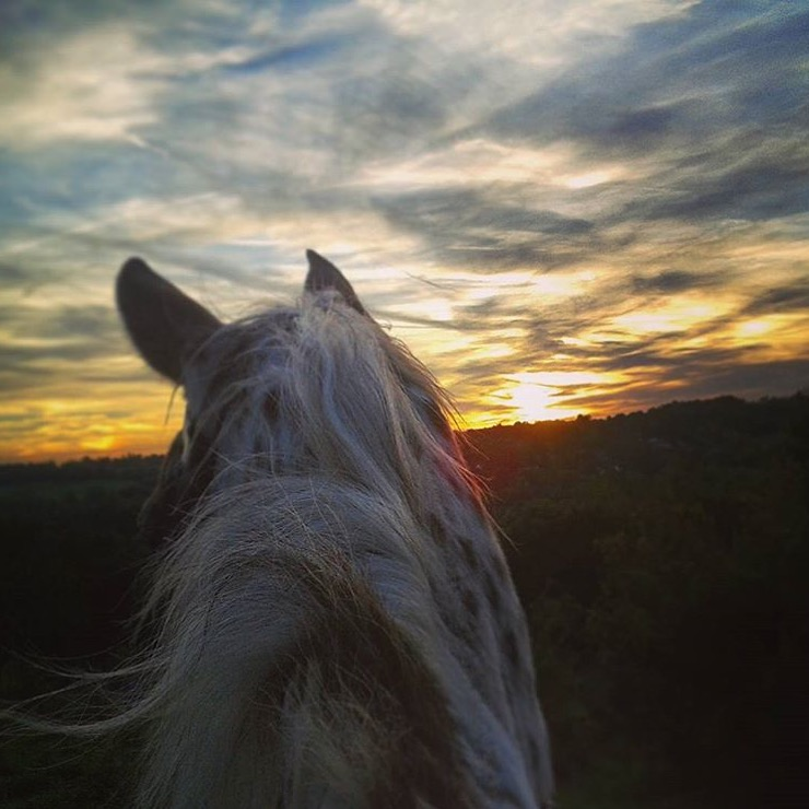 Thank you 🔷 @graeliwil 🔷 for sharing your evening view aboard your appaloosa near Croydon, England. ......... Tag your photo #lifebeetwentheears for a chance to be featured. Ride On! ^^ ........ #betweentheears #equinephotography #equestriantravel #croydon #england #thankyou #gracewillsmer