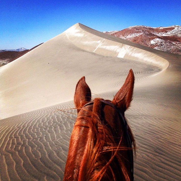Time to check in with our friend 🔷 @francb07 🔷 in Peru. ✨💫  ........ Tag your photo #lifebetweentheears for a chance to be featured. Ride On! ^^ ........ #betweentheears #dunes #peru #equestriantravel #equestrianphotography #thankyou #francis