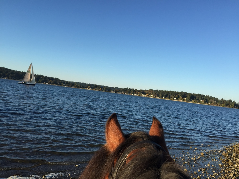Well I didn't get to attend the Charlotte Dujardin symposium like every dressage rider in the PNW did, but this helped make up for it. .......... Tag your photo #lifebetweentheears for a chance to be featured. Ride On! ^^ ......... #betweentheears #equestriantravel #equestrianphotography #sundayfunday #quartermasterharbor #mauryisland #washington