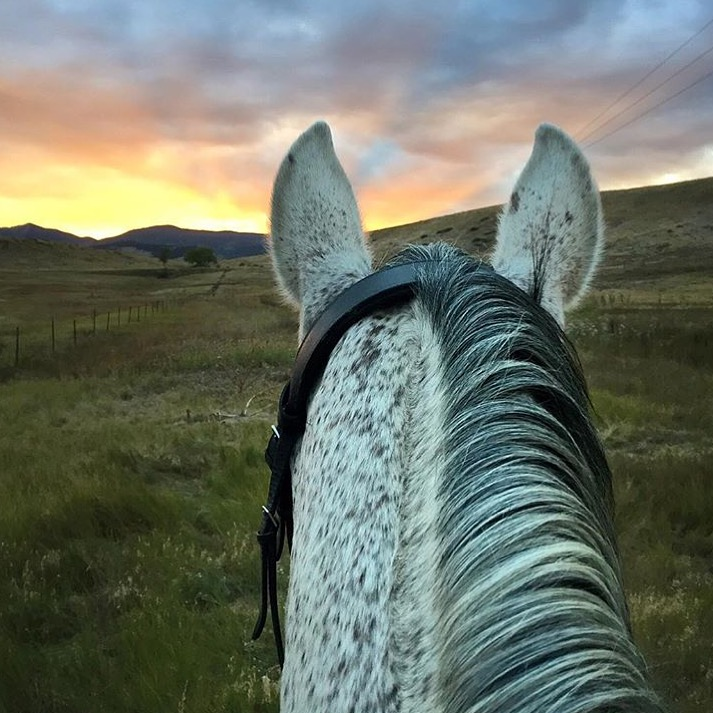 Thanks to 🔷 @nicrosis 🔷 for more of her simple perfection in Colorado. ...... Tag your photo #lifebetweentheears for a chance to be featured. Ride On! ^^ ...... #betweentheears #equestriantravel #equestrianphotography #colorado #thankyou #nicole